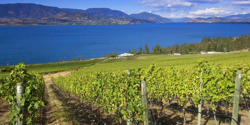 Cedar Creek Vineyard gelegen aan de the Lakeshore Wine Route in Kelowna