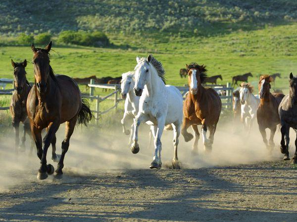 Sundance Guest Ranch - Ashcroft - British Columbia - Canada - Doets Reizen
