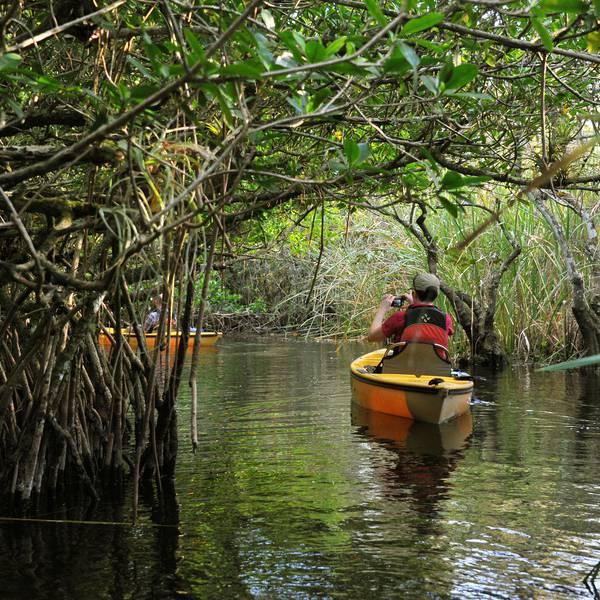 Everglades Mangrove Tunnel Tour Florida Amerika