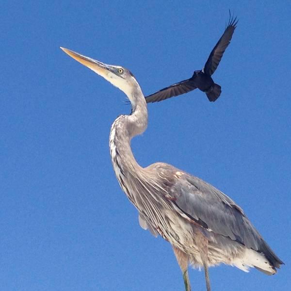 Vogels Florida - Doets Reizen