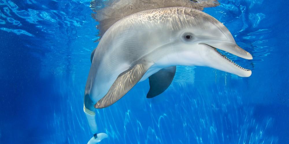 Winter Dolfijn Clearwater Marine Aquarium Florida
