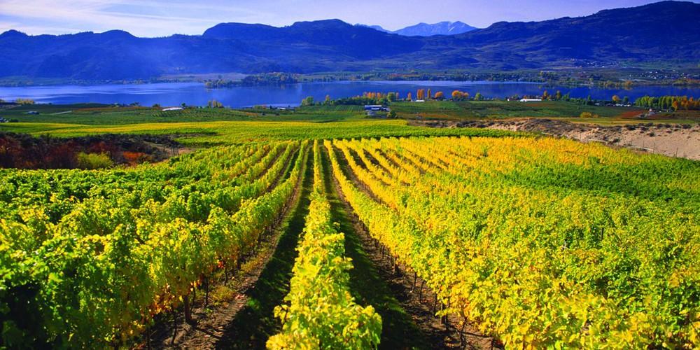 Mission Hill Family Estate - Kelowna - Okanagan Valley - British Columbia - Canada - Doets Reizen