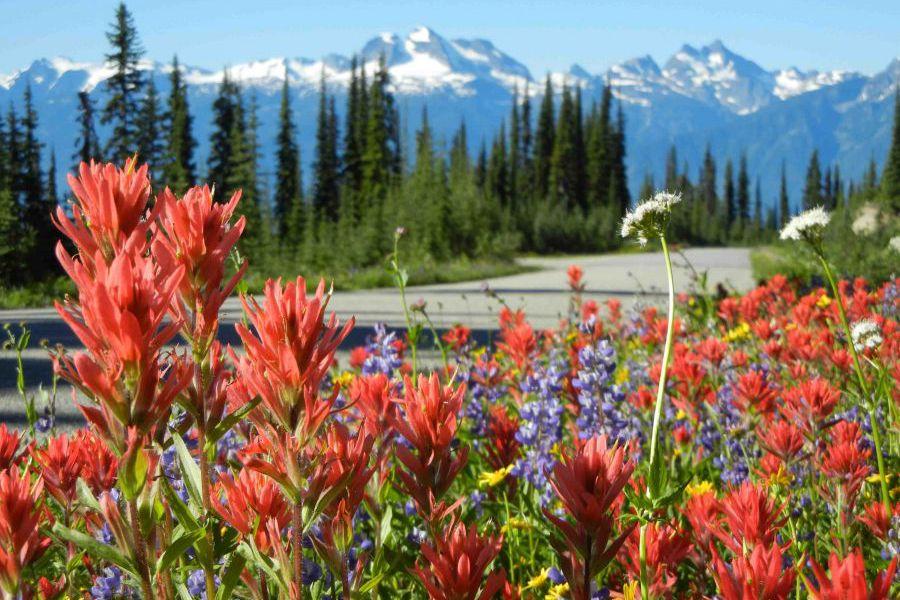 Mount Revelstoke National - British Columbia - Canada - Doets Reizen