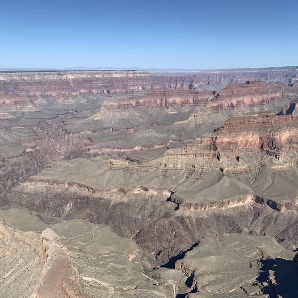 Grand Canyon Iris