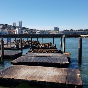 Fishersman Wharf - Dag 2 - Foto