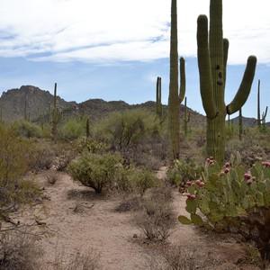 Tucson - Dag 11 - Foto