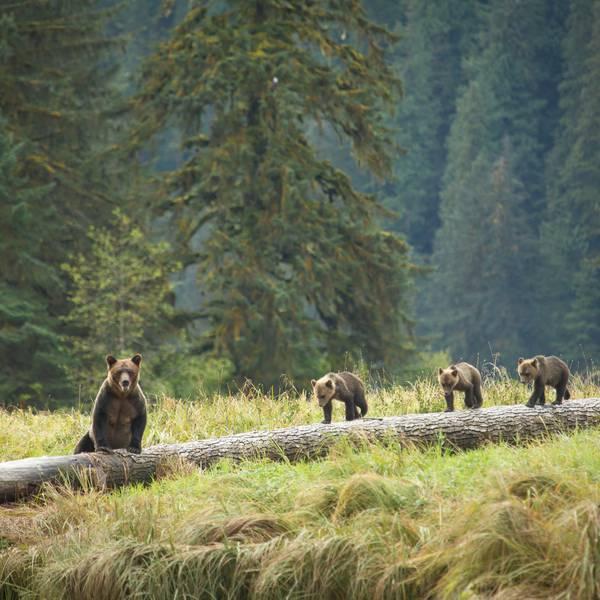 Spirit Bear Lodge - Doets Reizen - 1