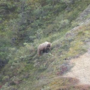 Busexcursie Denali National park - Dag 7 - Foto