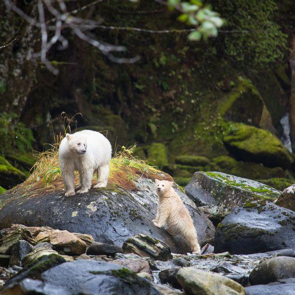 Spirit Bear Lodge - Doets Reizen - 3