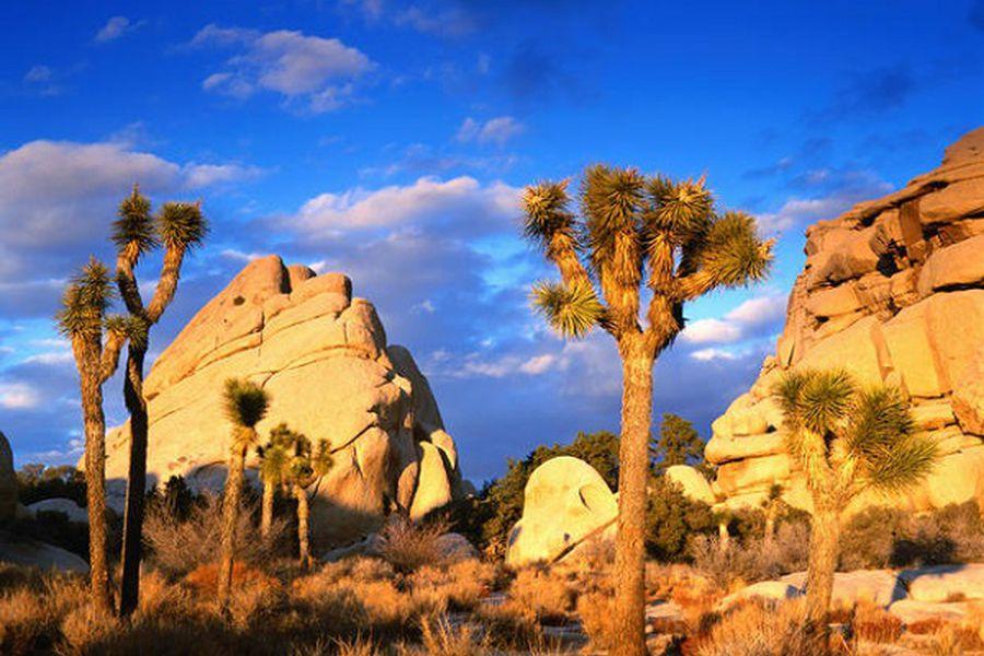 Joshua Tree National Park - California - Amerika - Doets Reizen