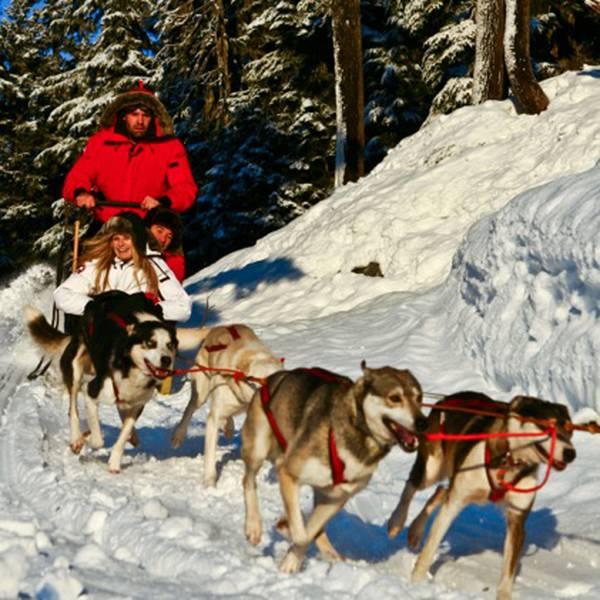 Wintersport - Hondensleetocht - Whistler - British Columbia - Canada - Doets Reizen