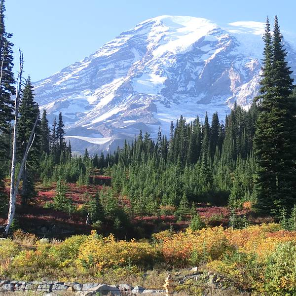 Mount Rainier National Park - Washington State - Doets Reizen