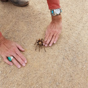 Apache Trail & Sedona - Dag 6 - Foto