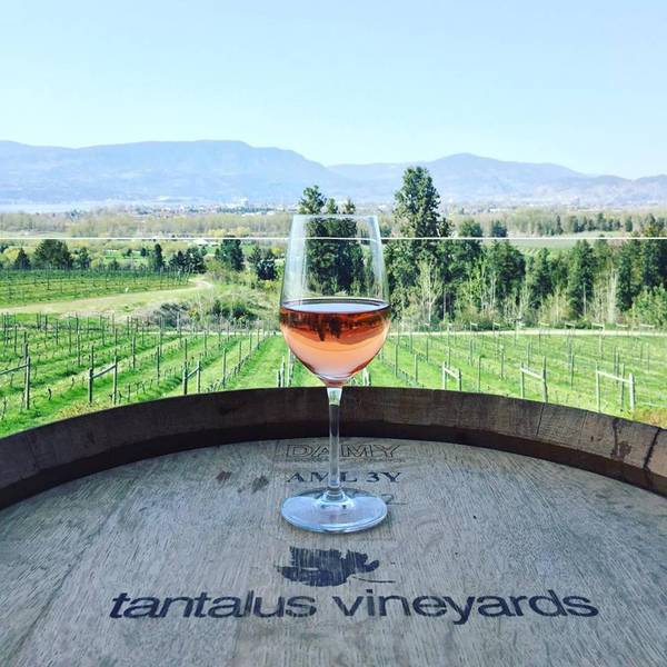Tantalus Vineyards - Kelowna - Okanagan Valley - British Columbia - Canada - Doets Reizen
