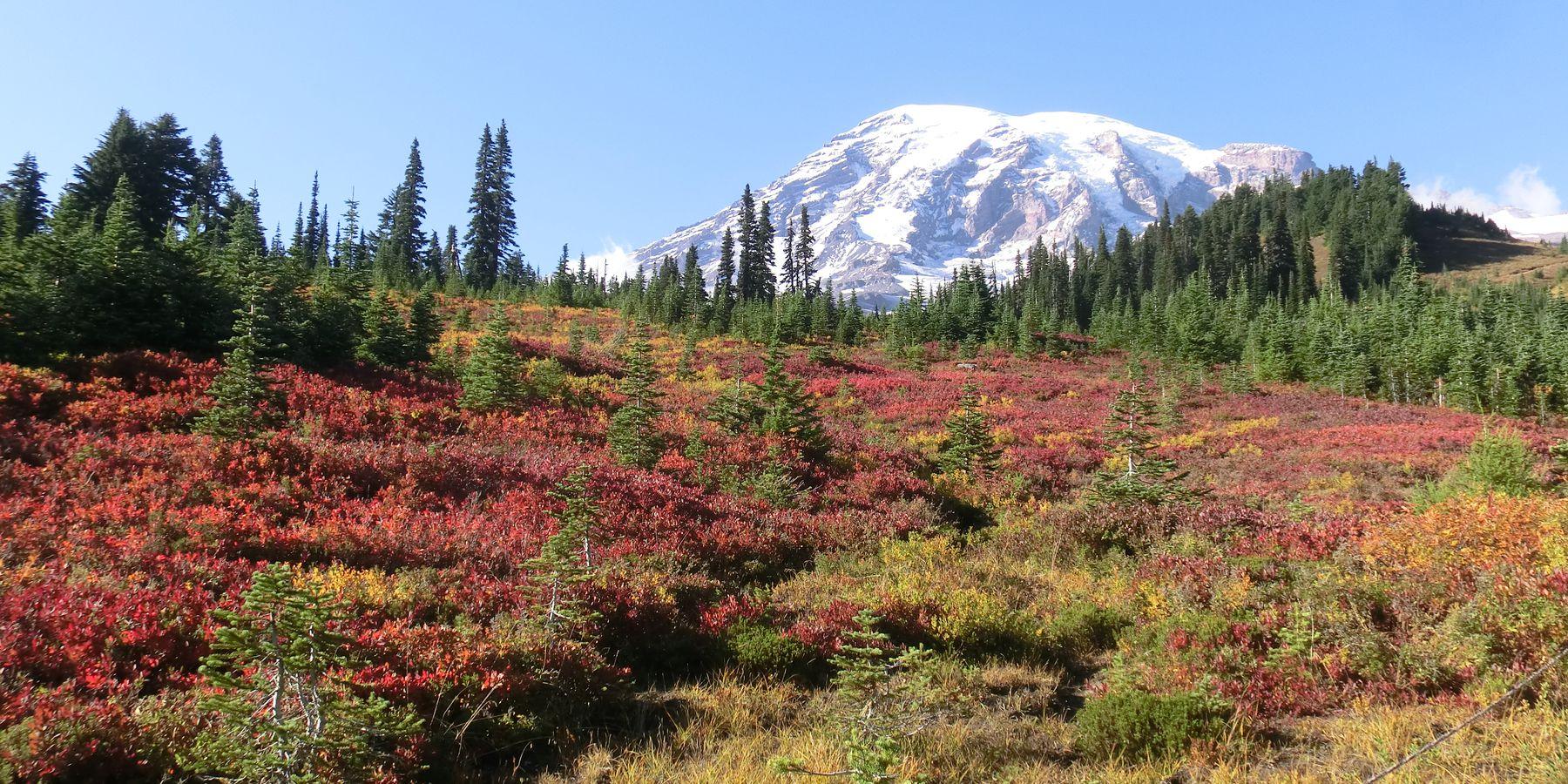 Mount Rainier National Park - Washington State - Doets Reizen