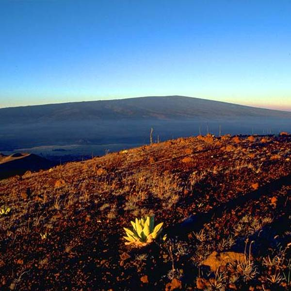 Hike the World Highest Mountain Big Island Hawaii