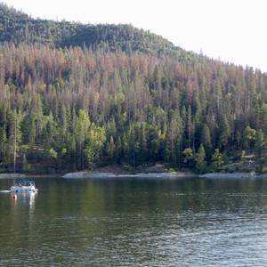 Van Sequoia naar Bass Lake - Dag 15 - Foto