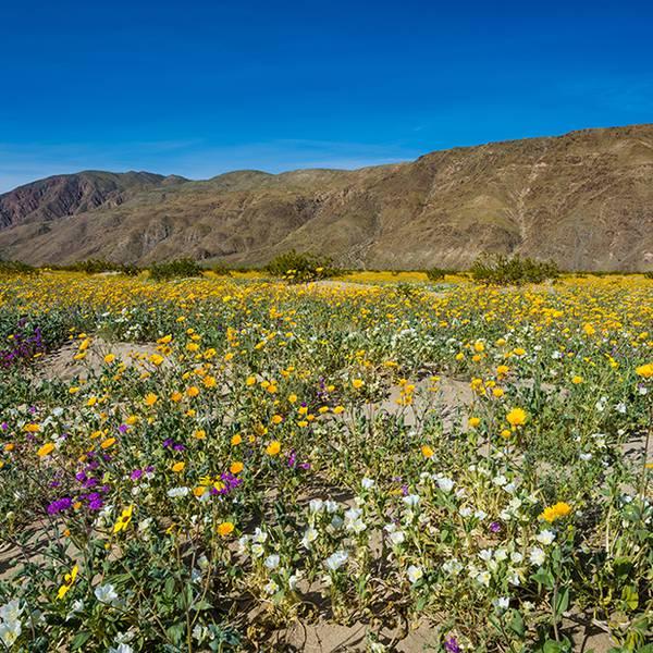 Anza Borrego Desert - California - Amerika - Doets Reizen