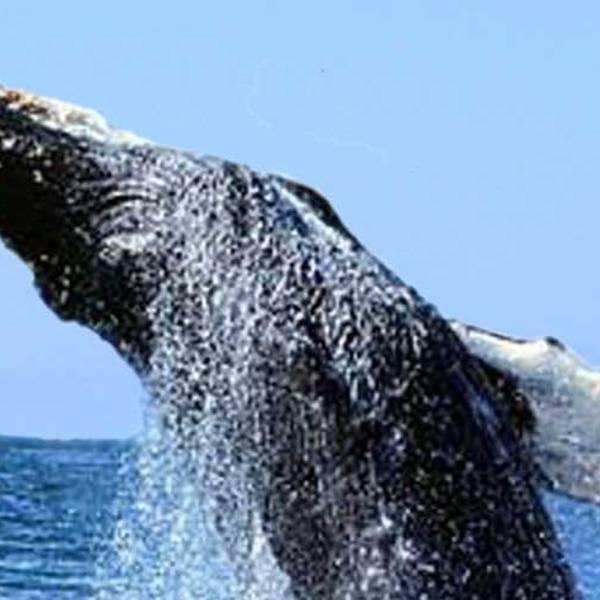 Walvissen spotten Oahu - Hawaii - Doets Reizen