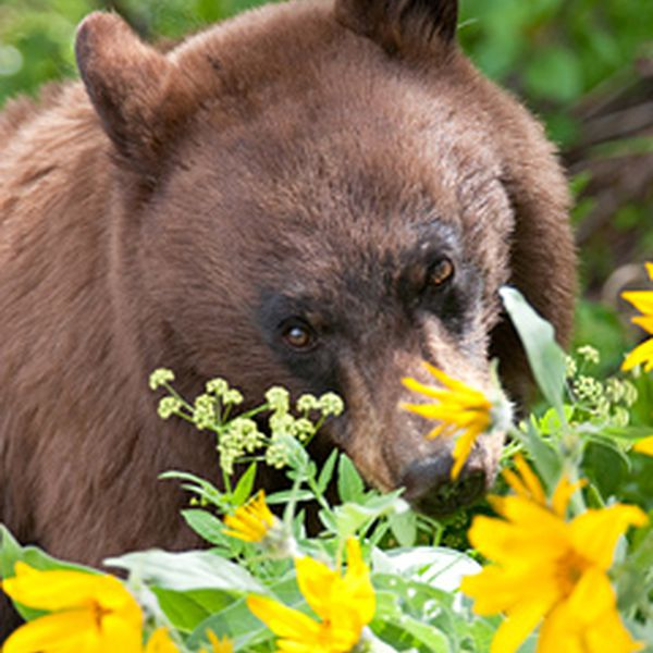 Wildlife in Grand Teton NP