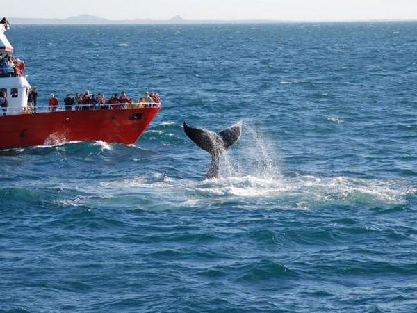 Reykjavik Whale Watching - IJsland - Doets Reizen