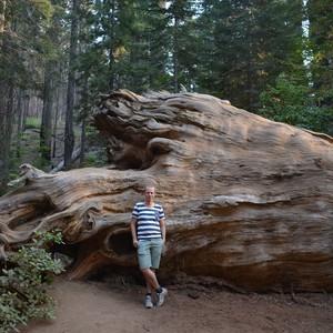 Yosemite park - Dag 21 - Foto