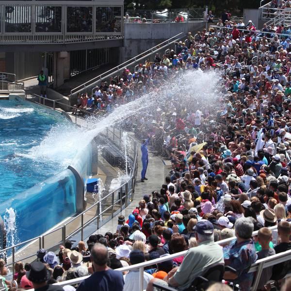 San Diego Seaworld - California - Amerika - Doets Reizen