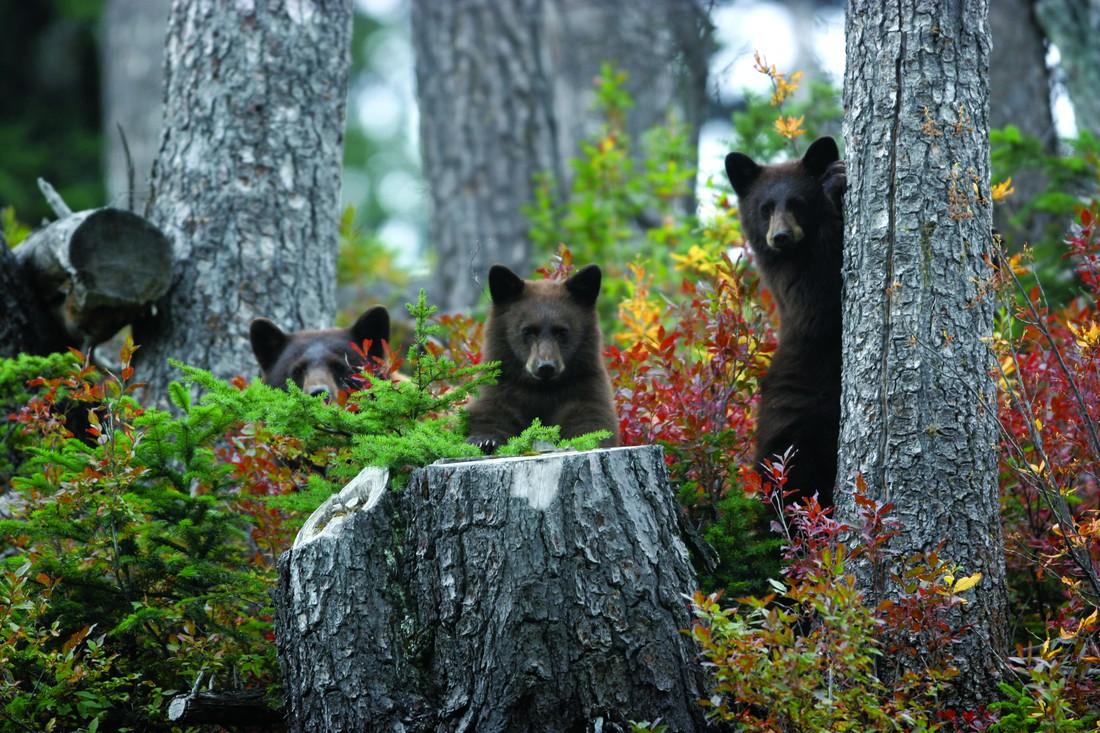 Wildlife Whistler - British Columbia - Canada - Doets Reizen