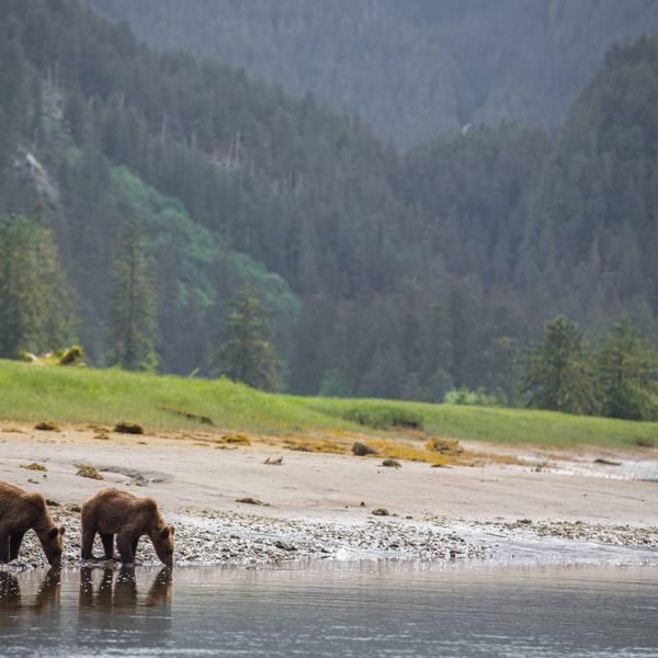 Spirit Bear Lodge - Great Bear Rainforest - Canada - Doets Reizen