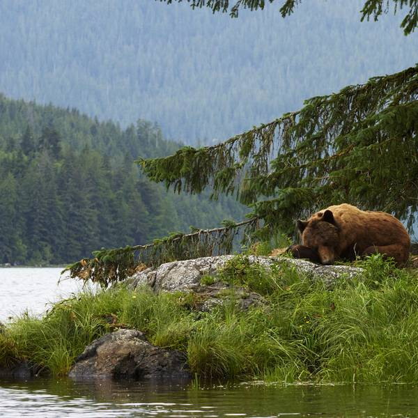 Knight Inlet Lodge Canada - 2