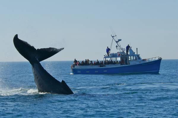 Walvissen spotten - Nova Scotia - Canada - Doets Reizen
