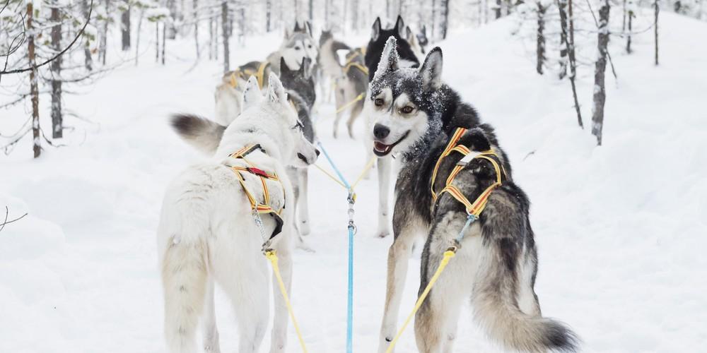 Hondenslee Harads - Doets Reizen - Vakantie Zweden - Credit Visit Sweden