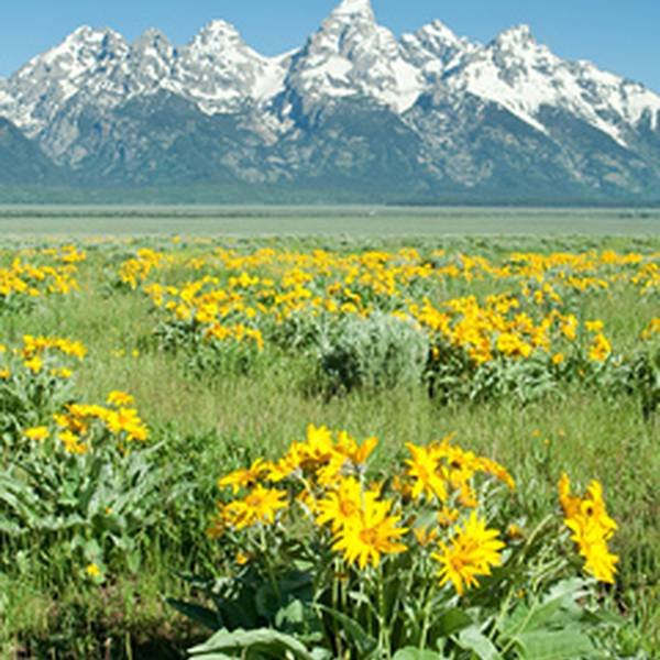 Bloemen in Grand Teton NP