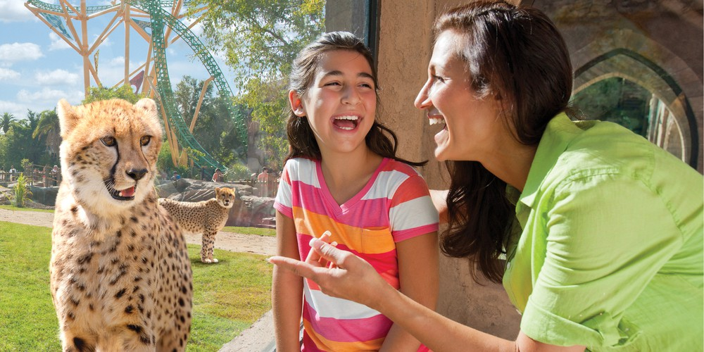 Busch Gardens Tampa Florida