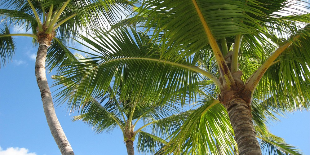 Strand Florida - Doets Reizen