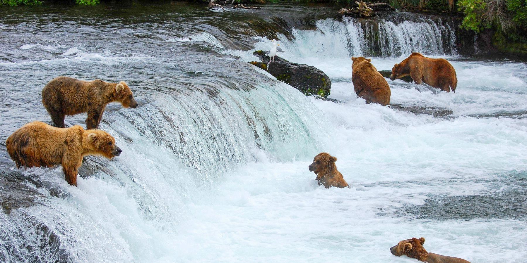 Brooks Lodge - Katmai National Park - Alaska - Doets Reizen