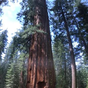 Een dagje Yosemite - Dag 16 - Foto