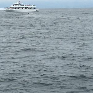 Walvissen spotten - Dag 20 - Foto