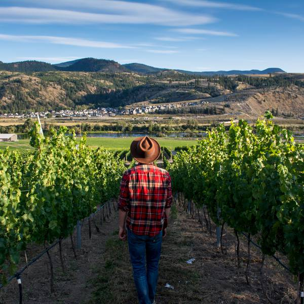 Harper's Trail Winery - Kamloops - British Columbia - Canada - Doets Reizen