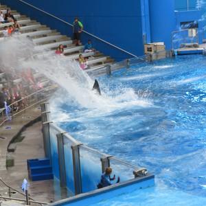 Seaworld, FL - Dag 18 - Foto
