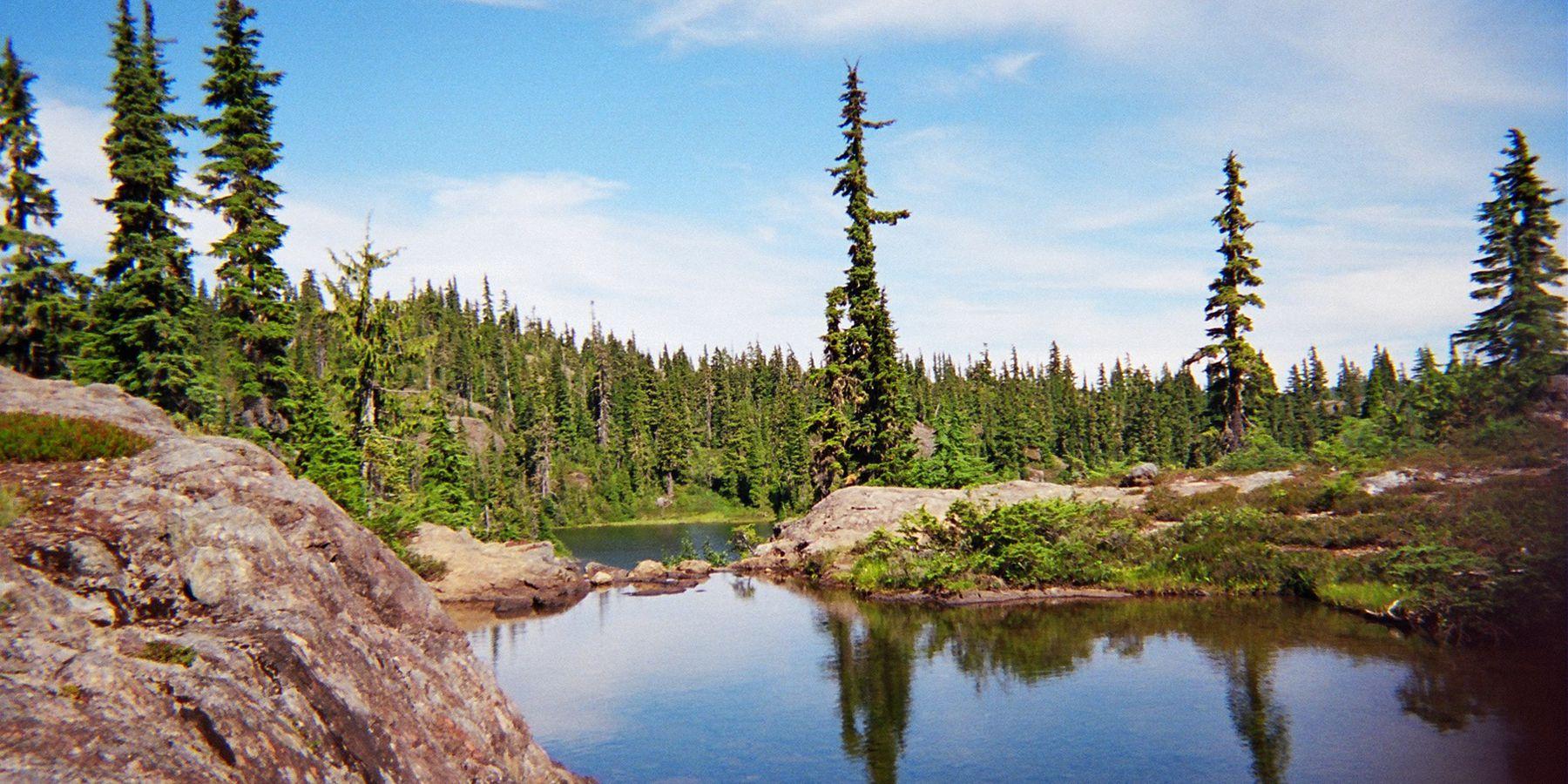 Strathcona Provincial Park Forbidden Plateau