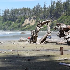 Het strand bij Ucluelet en Bearwatch - Dag 7 - Foto