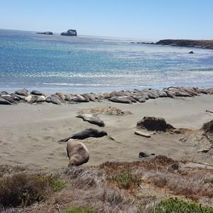 Vandaag naar The Big Sur!! - Dag 5 - Foto