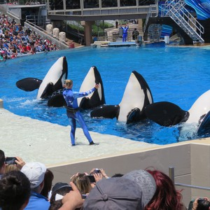 Sea World San Diego - Dag 9 - Foto