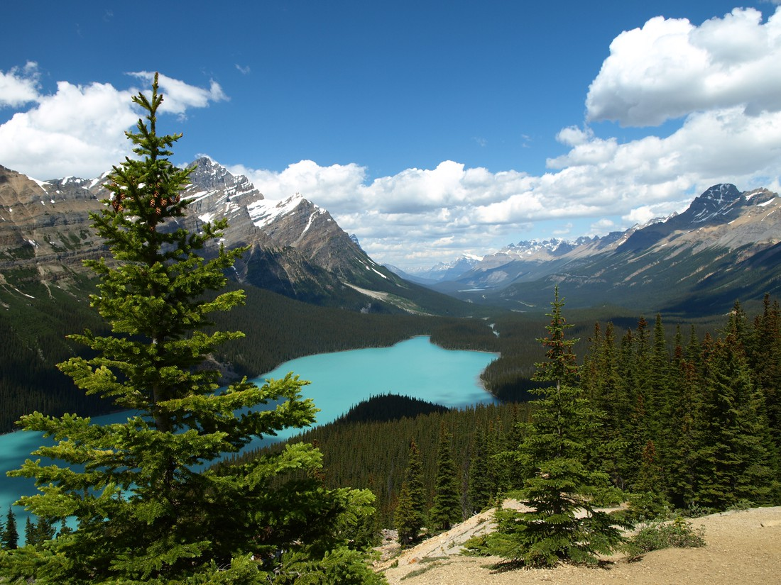 Icefields Parkway Peyto Lake