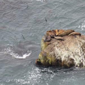 Walvissen gespot langs de kust - Dag 5 - Foto