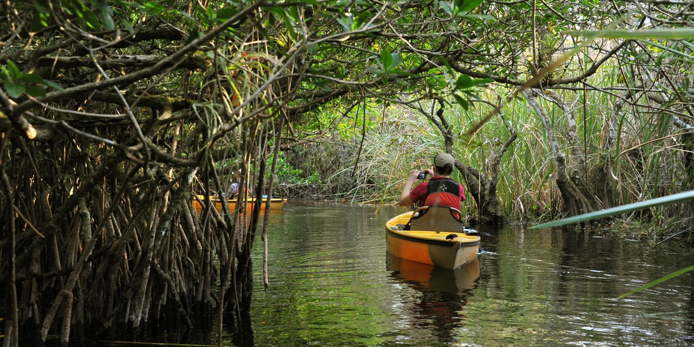 Everglades Mangrove Tunnel Tour Florida Amerika