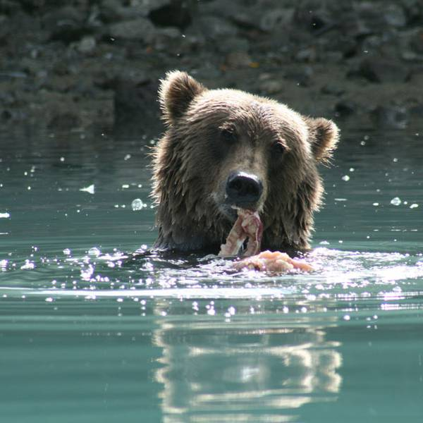 Wildlife - Redoubt Bay - Alaska - Doets Reizen