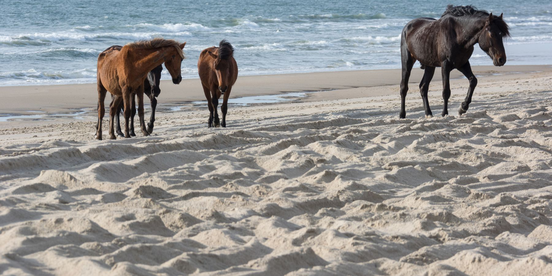 Ocracoke Island - Outerbanks - North Carolina - Amerika - Doets Reizen