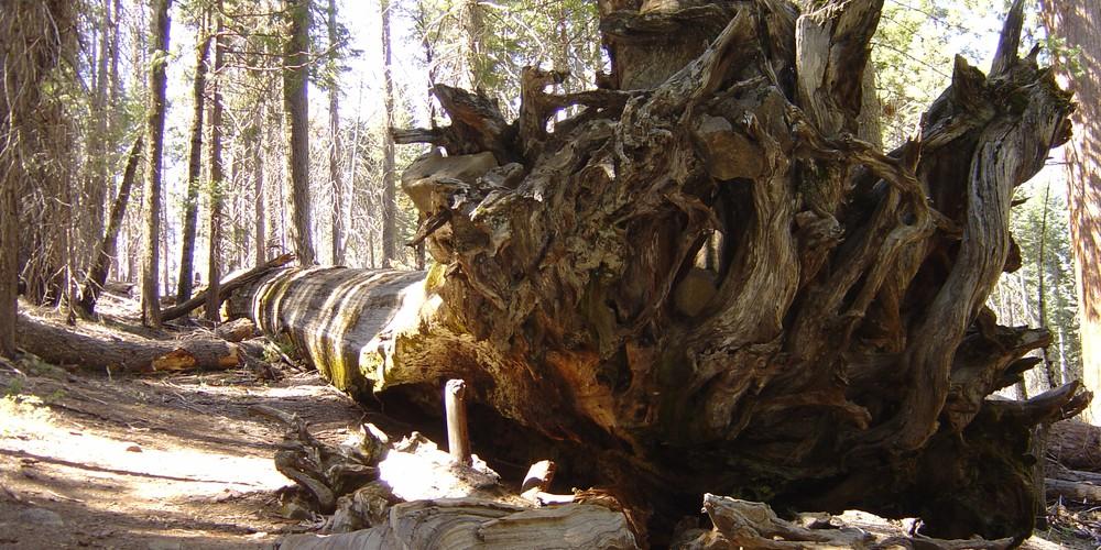 Sequoia National Park - California - Amerika - Doets Reizen